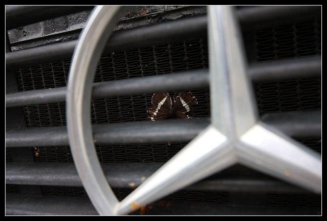 un papillon mort écrasé sur le radiateur... snif